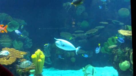 Columbus Zoo Aquarium   YouTube