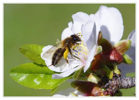 Cómo ahuyentar abejas