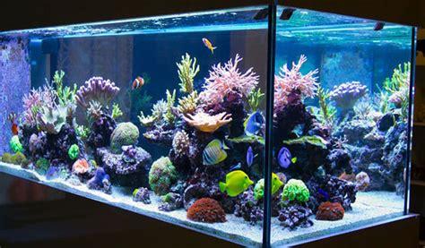 Cómo alimentar a los peces de un acuario en casa