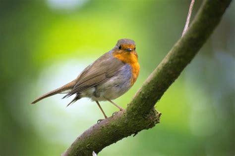 ¿Cómo atraer pájaros al jardín?   5 trucos infalibles