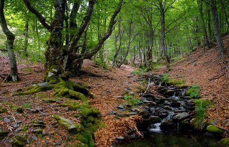 ¿Cómo compiten los árboles en el bosque para sobrevivir ...