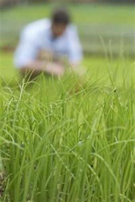 Cómo construir sensores de humedad de suelo - Eximbanker.com