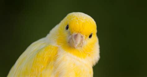 Cómo criar canarios ¡y enamorar a los niños! | Blog Verdecora