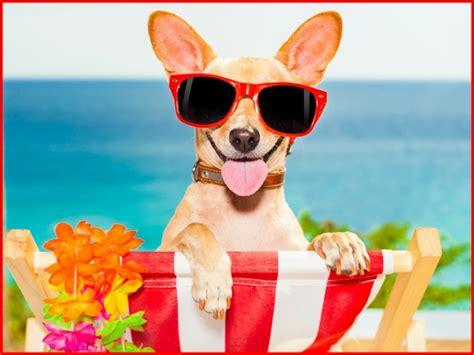 Cómo cuidar y refrescar a tu perro en verano   Todo mascotas