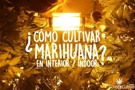 ¿Cómo cultivar marihuana en Indoor? Lo que debes tener y ...