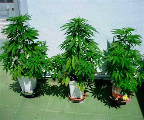Como Cultivar Marihuana en Invierno - Blog cultivo marihuana