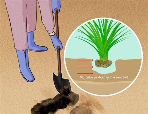 Como Cultivar Plantas para Jardín