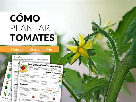 Cómo cultivar tomates en casa | Guía paso a paso - Plantea ...