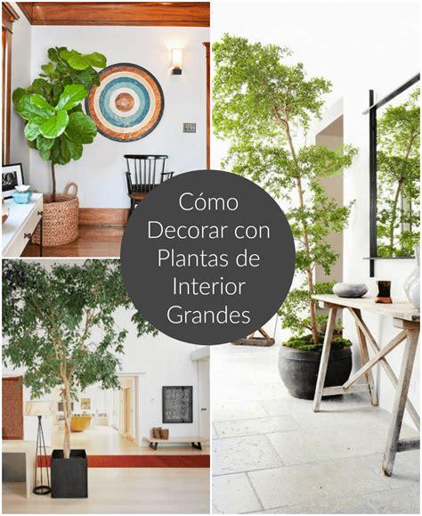Cómo decorar con plantas de interior grandes