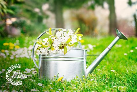 ¿Cómo decorar jardines pequeños? | Flores Castillón