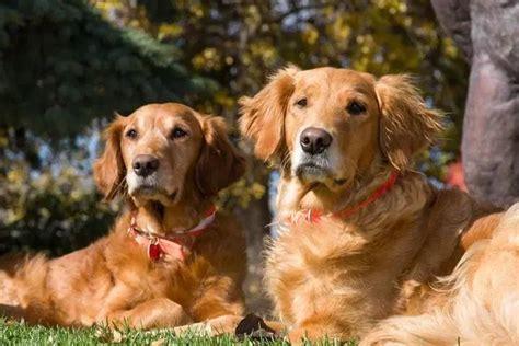 ¿Cómo detectar que mi perro tiene cáncer? | Schnauzi.com