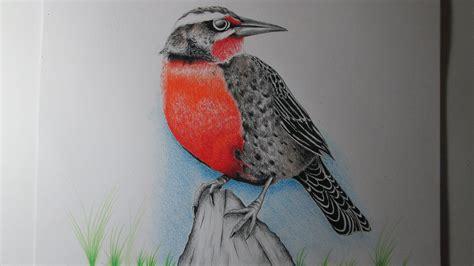 Cómo dibujar un pájaro con lápices de colores paso a paso ...