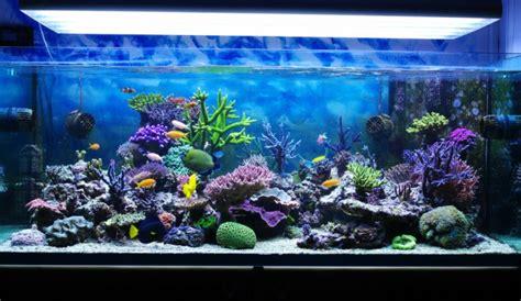Cómo elegir un acuario   Blog Verdecora