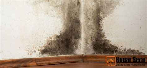 Cómo eliminar el moho en de las paredes en casa. Eliminar ...