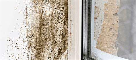 Cómo eliminar la humedad y el moho de la pared rápidamente ...