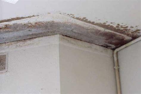 ¿Cómo eliminar manchas de humedad de las paredes?