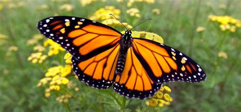 ¿Cómo es la vida de una mariposa?  Desarrollo y esperanza ...