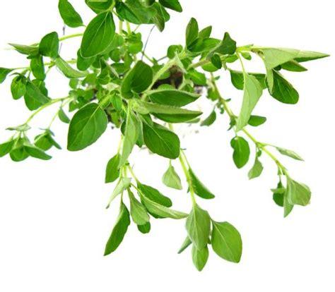 Cómo funcionan las plantas medicinales   6 pasos   unComo