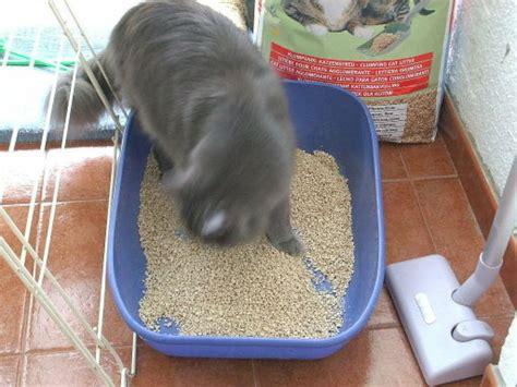 Cómo hacer arena casera para gatos | Mascotas