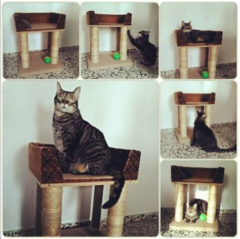 Cómo hacer rascadores caseros para gatos | Mascotas