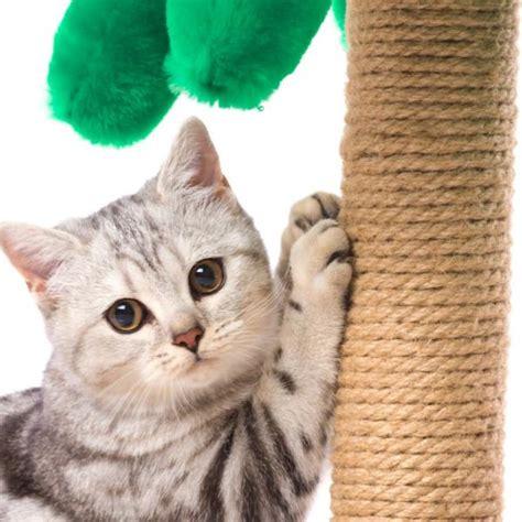 Cómo hacer rascadores para gatos caseros   5 pasos