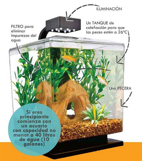 Como hacer un acuario de peces tropicales en agua dulce ...