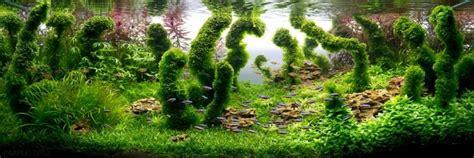 Cómo hacer un acuario plantado e imágenes de los más ...