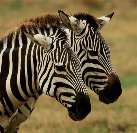 Cómo llegar a la Reserva Africana de Sigean. Parque ...