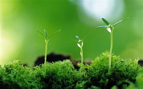 Como Nacen Las Plantas?   Donde Viven, Como Nacen