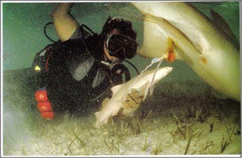 Como nacen los tiburones: conoce este milagro de la naturaleza