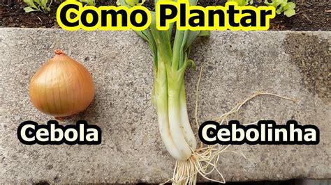 Como Plantar Cebolinha e Cebola em Vaso   YouTube