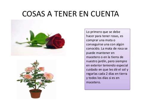 Como plantar, cuidar y multiplicar rosas