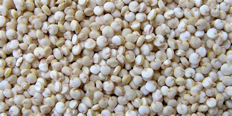 Como plantar quinoa | Hortas.info