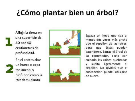 Cómo plantar un árbol