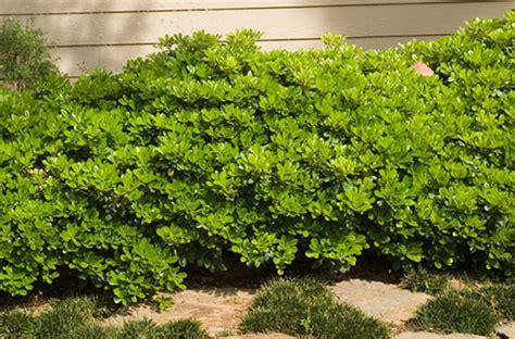 Cómo plantar un arbusto – The Home Depot Blog