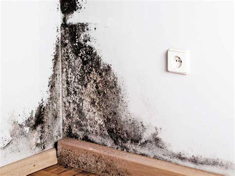 Cómo podemos prevenir el moho en las paredes de tu casa