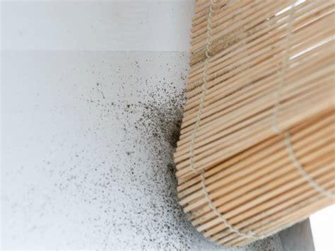 Cómo quitar manchas de humedad y moho en la pared   Trucos ...