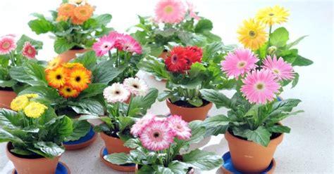 Como se cultivan las plantas ornamentales. • Revista ...