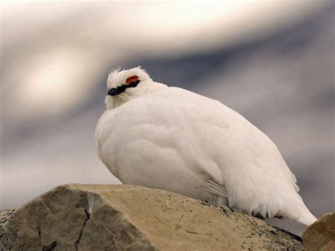 ¿Cómo se protegen del frío los pájaros?