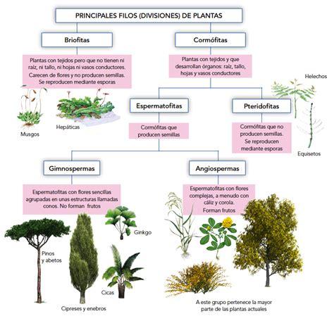 Como Se Reproducen Las Plantas. Affordable Como Se ...