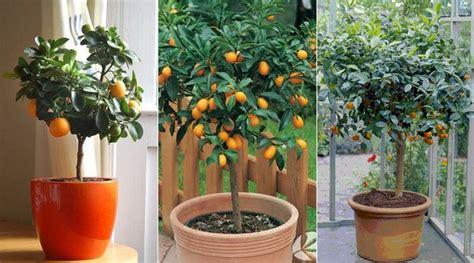 como sembrar plantas en macetas