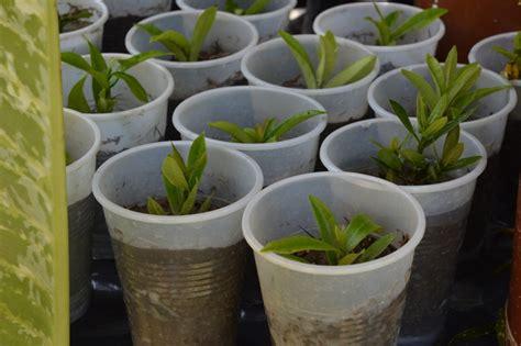 como sembrar plantas ornamentales