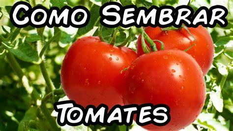 Como Sembrar Tomates Con Exito, Del Semillero Al ...