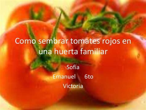 Como sembrar tomates rojos en una huerta familiar