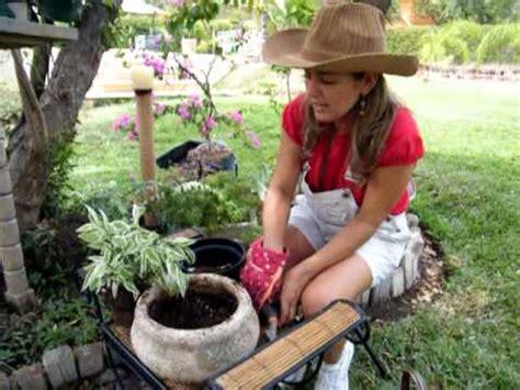 Como sembrar una planta con Claudia Alarcón. As a plant ...