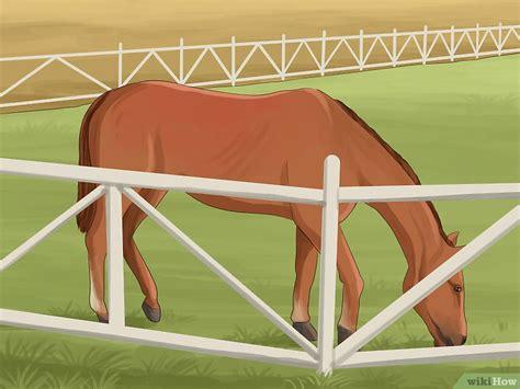 Cómo superar el miedo a los caballos: 8 pasos