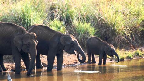 Complete list of all Wildlife Sanctuaries of Karnataka, India
