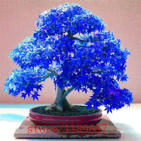 Compra planta de árbol de arce online al por mayor de ...