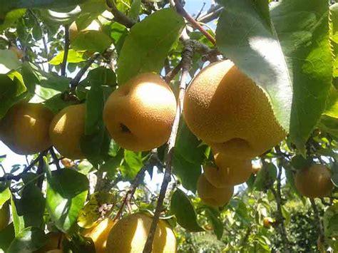 Comprar arboles frutales. Todo tipos de frutas en el ...