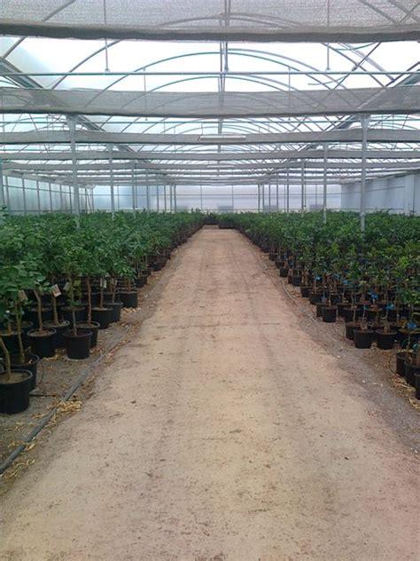 Comprar árboles frutales y cítricos bio naturales de ...